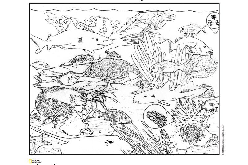 national geographic kids coloring pages coloring book animals a to i kids coloring pages geographic national