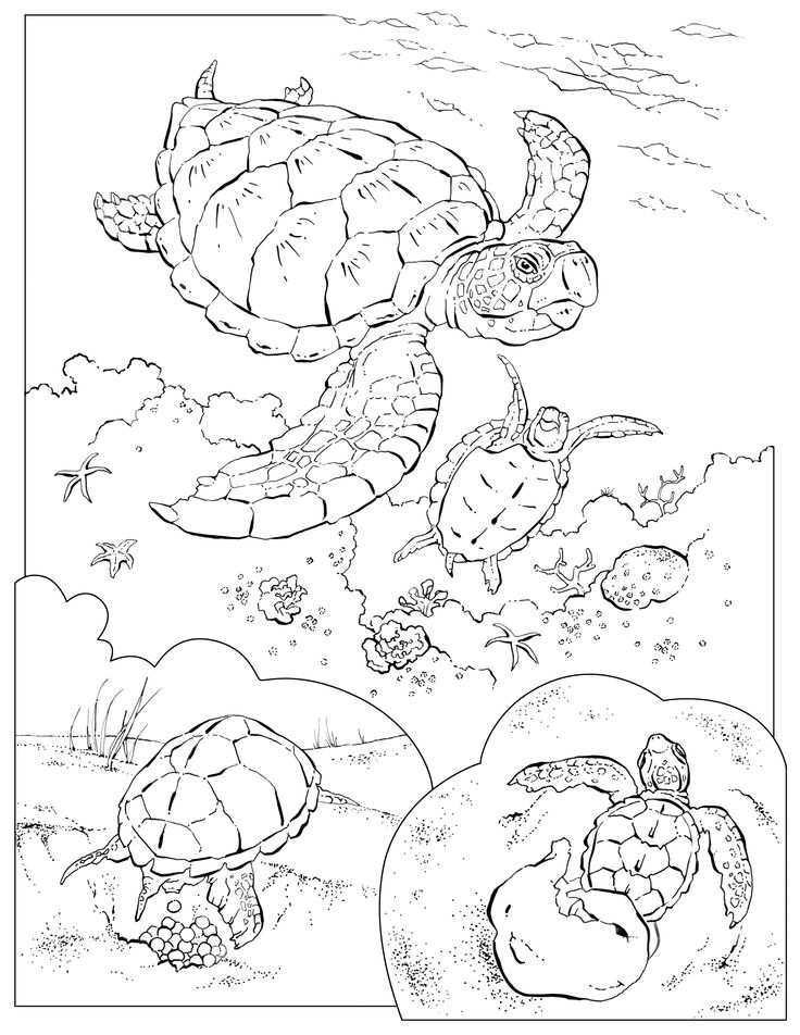 national geographic kids coloring pages coloring book animals j to z coloring books coloring kids geographic coloring pages national
