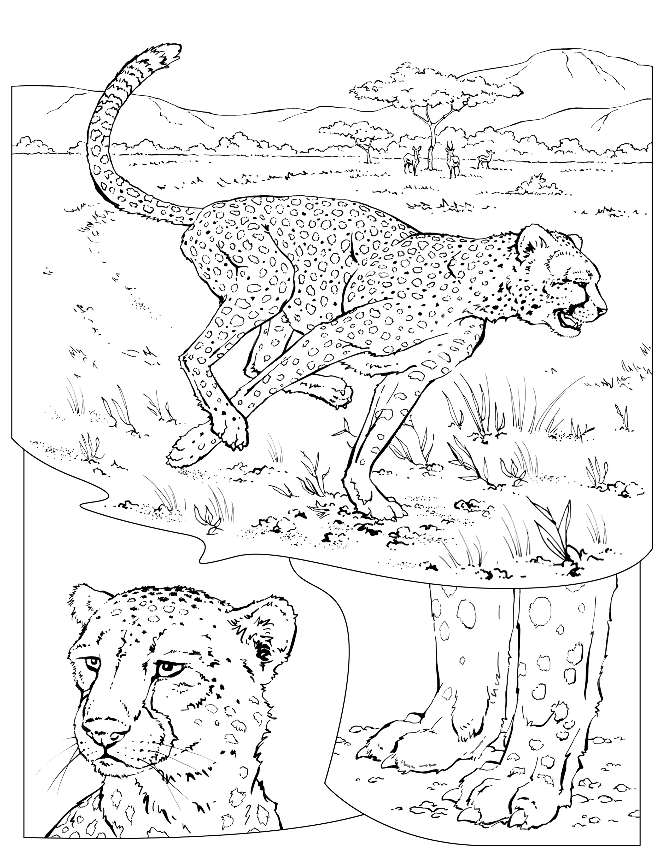 national geographic kids coloring pages coloring book animals j to z coloring pages national geographic kids