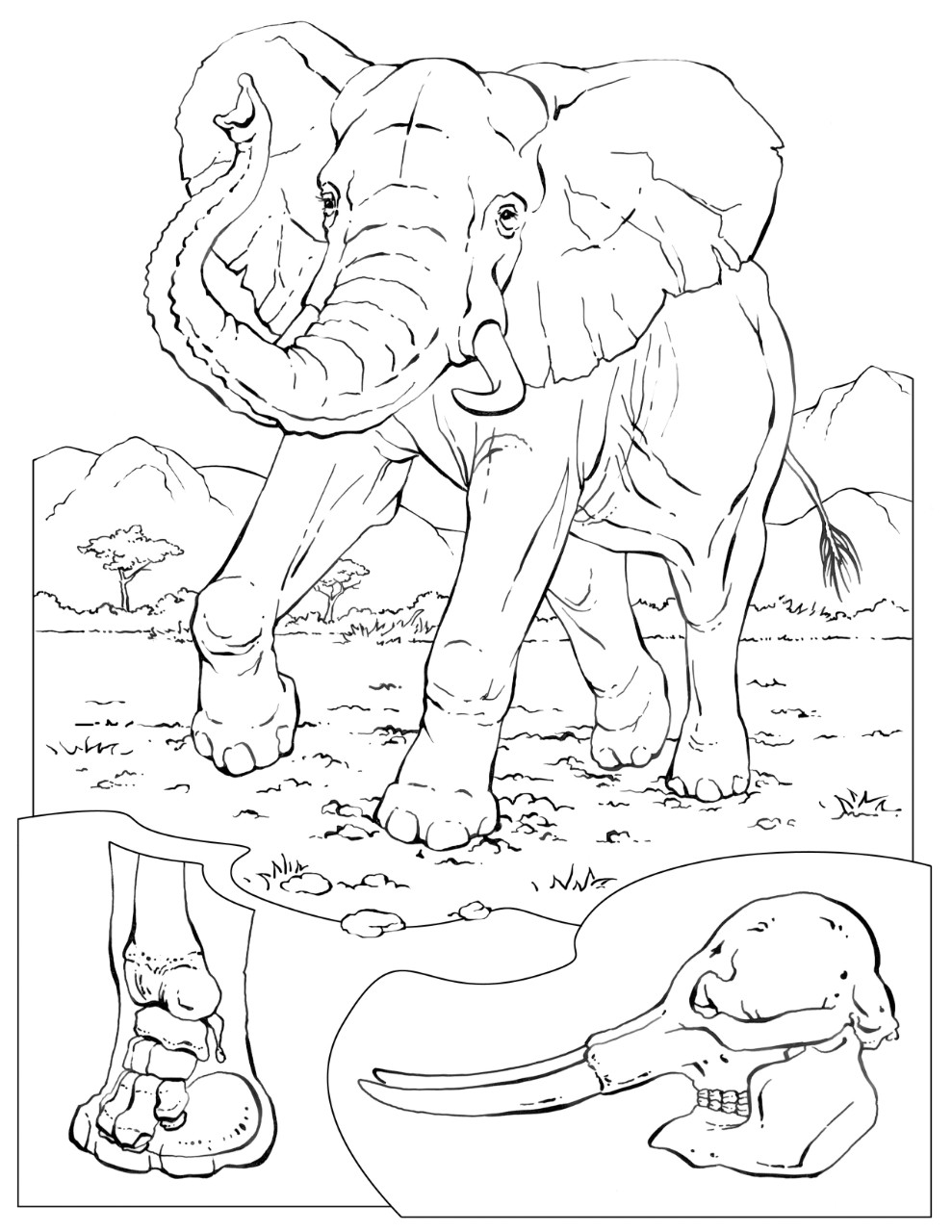 national geographic kids coloring pages mcdonalds happy meal coloring page and activities sheet national coloring geographic pages kids