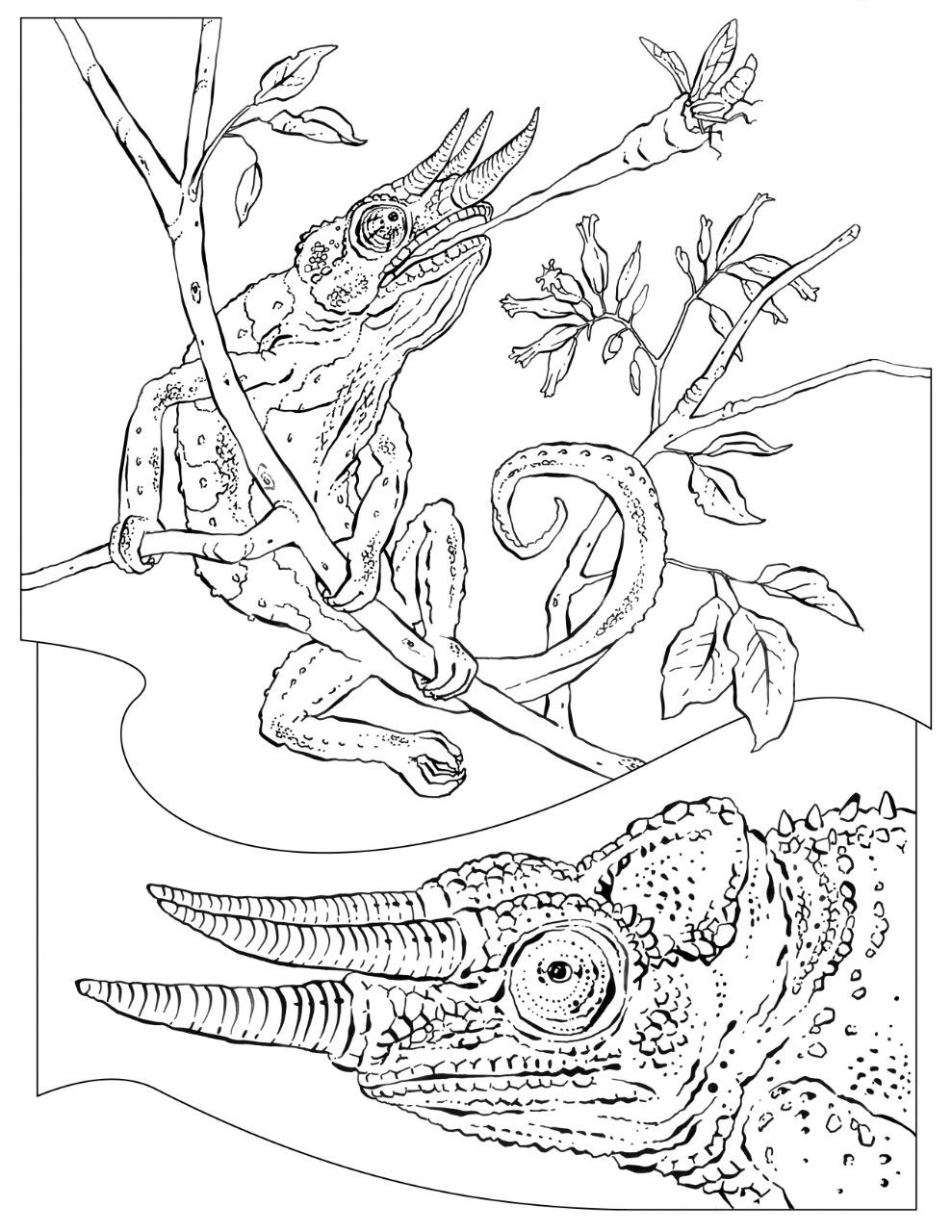 national geographic kids coloring pages national geographic coloring fish coloring pages geographic national coloring pages kids