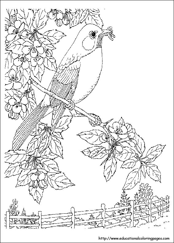 nature scene nature coloring pages 9706 pondlife artjpg 571799 coloring pages pinterest pages scene nature nature coloring