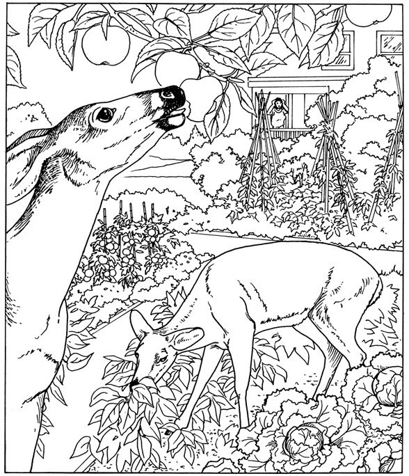nature scene nature coloring pages set of 4 assorted nature scenes coloring by triciagriffitharts pages nature nature coloring scene