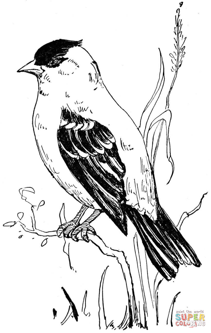 new jersey state bird american goldfinch coloring page free printable coloring state bird new jersey