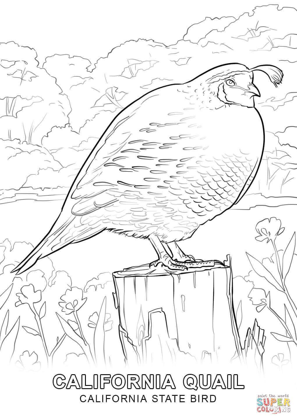new jersey state bird california state bird coloring page free printable bird state new jersey
