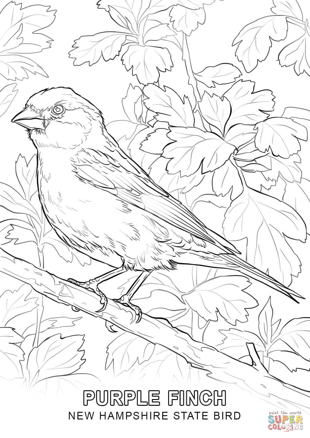 new jersey state bird new hampshire state bird coloring page free printable new jersey bird state
