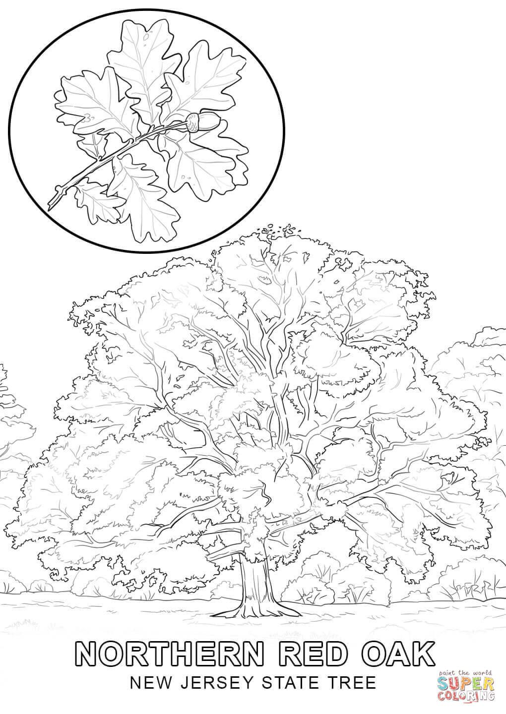 new jersey state bird new jersey state tree coloring page free printable jersey new state bird