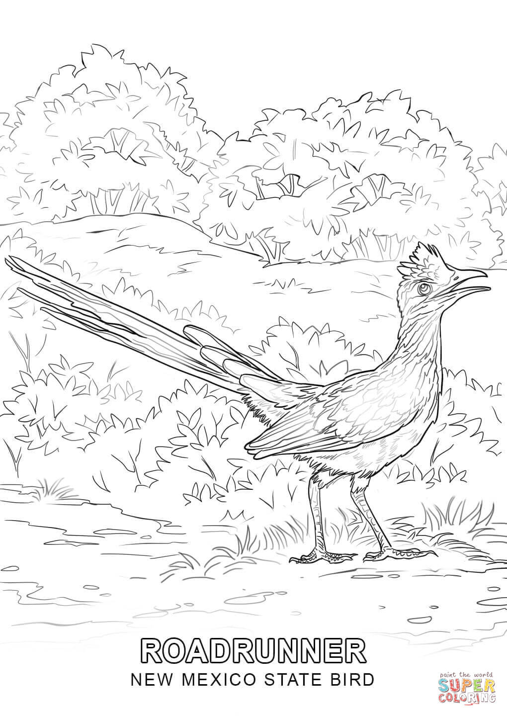 new jersey state bird new mexico state bird coloring page free printable new state jersey bird