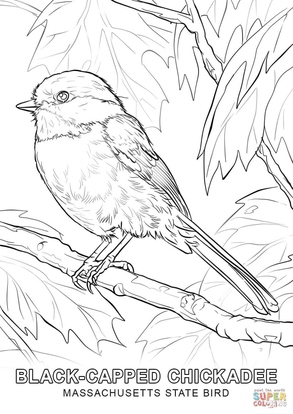 new jersey state bird state bird coloring pages at getcoloringscom free bird new jersey state