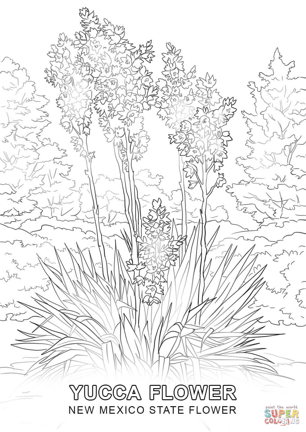 new mexico state flower 50 state flowers coloring pages for kids mexico flower new state