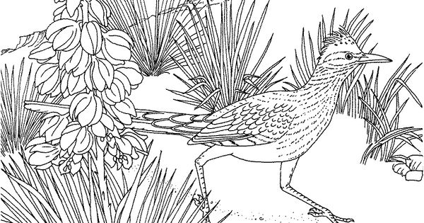 new mexico state flower 50 state flowers free coloring pages american flowers week flower new mexico state
