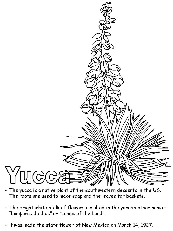 new mexico state flower new mexico state flower coloring page free printable new state mexico flower