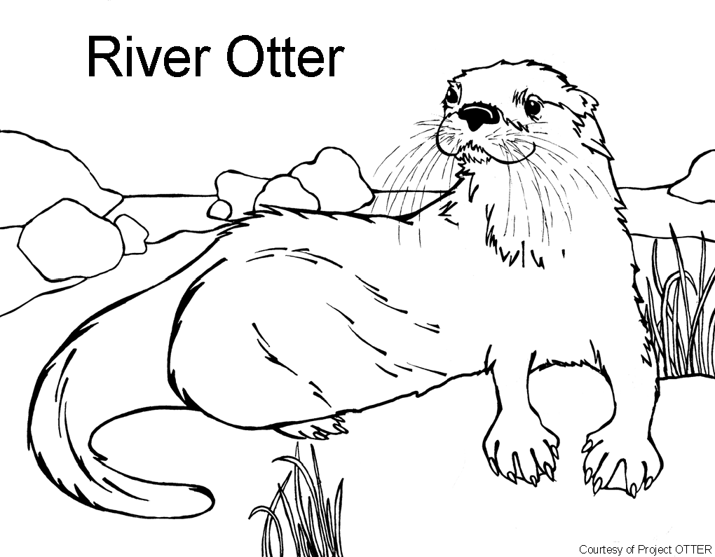 o is for otter coloring page o is for otter coloring page coloring home page o for otter is coloring