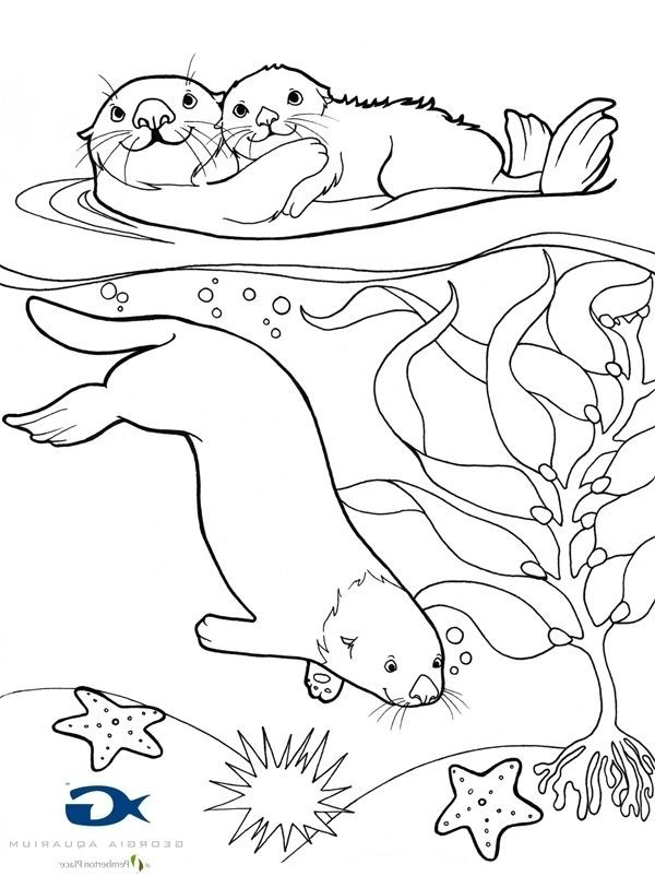 o is for otter coloring page otters coloring pages otter o is coloring for page