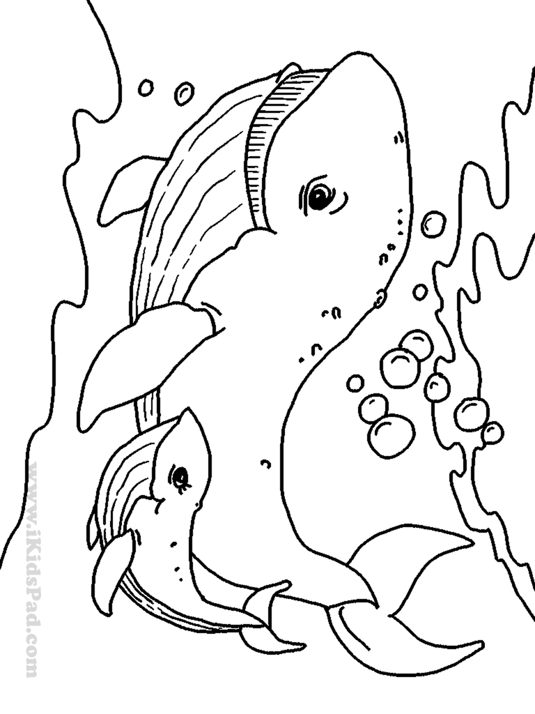 ocean animals printable coloring pages free printable seahorse coloring pages for kids pages ocean animals printable coloring