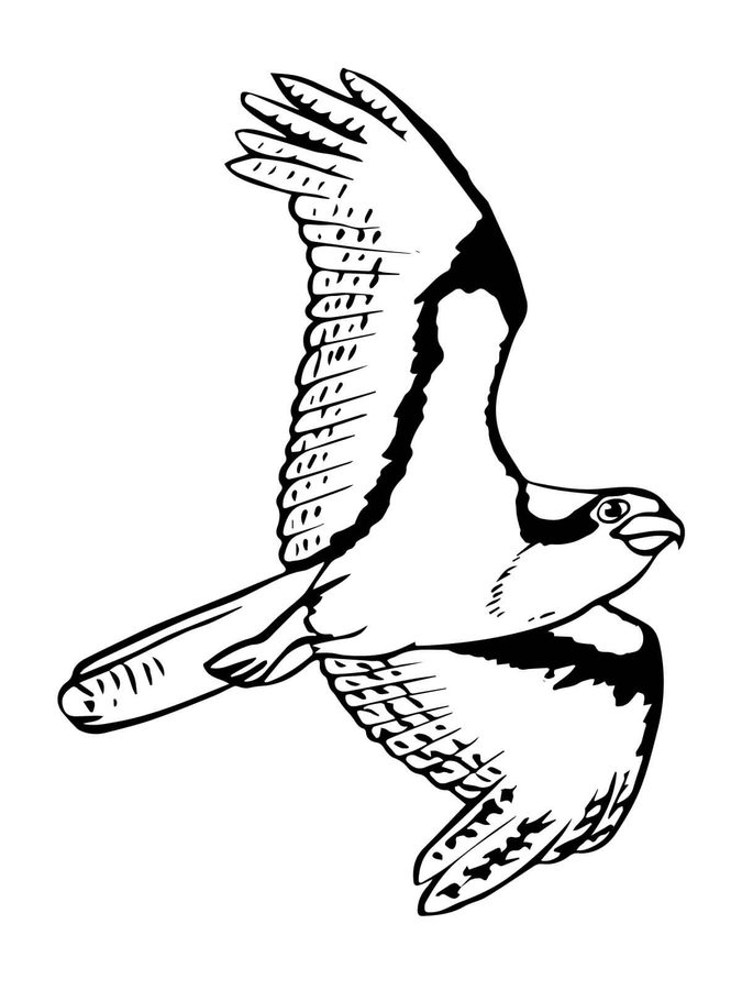osprey coloring page black and white osprey drawing sketch coloring page page osprey coloring