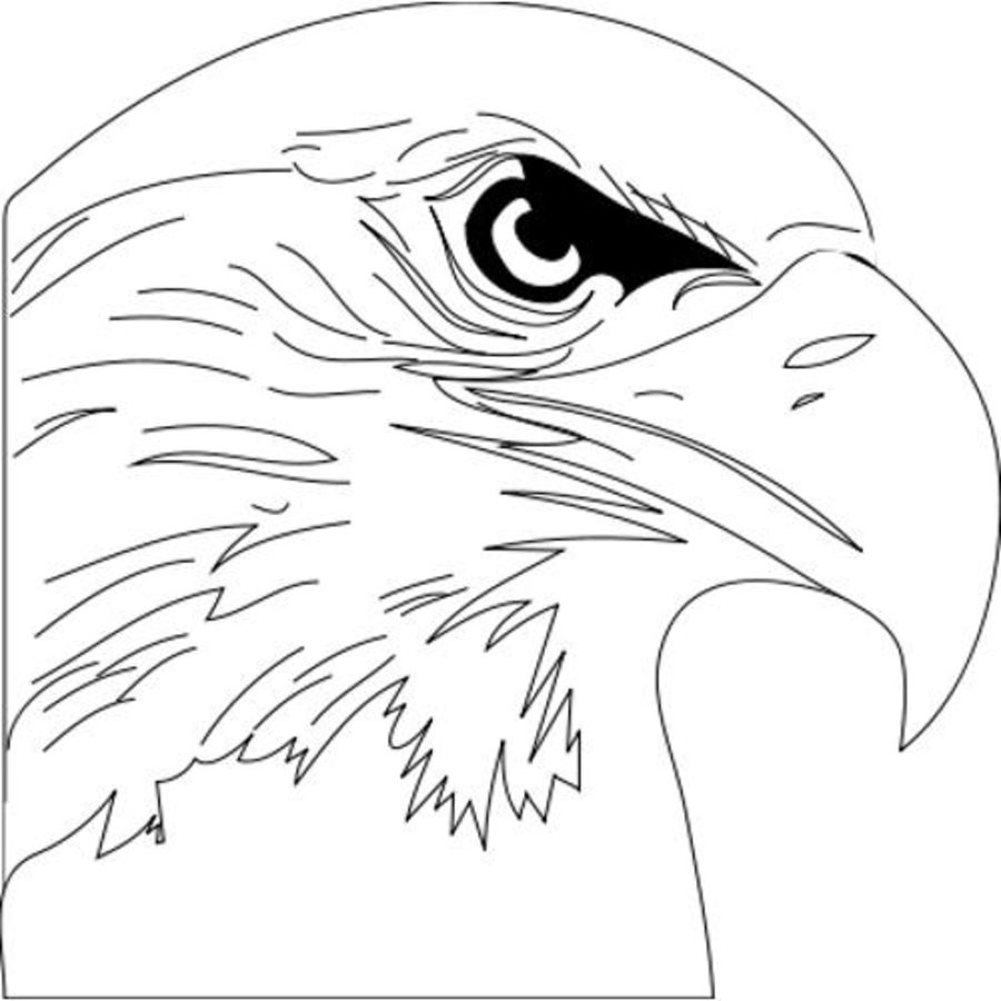 osprey coloring page free osprey coloring pages coloring osprey page