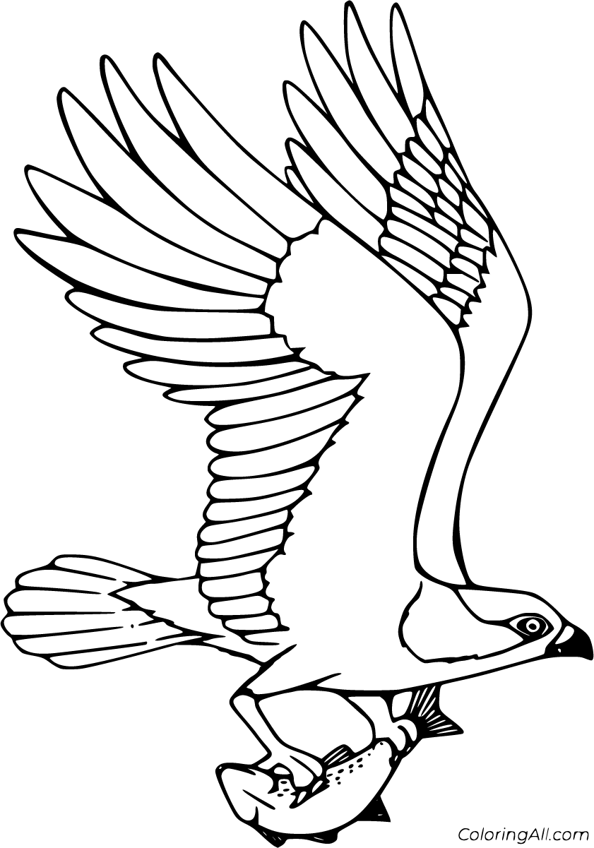 osprey coloring page free osprey coloring pages page coloring osprey