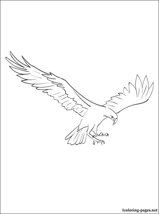 osprey coloring page osprey bird coloring page free printable coloring pages coloring osprey page
