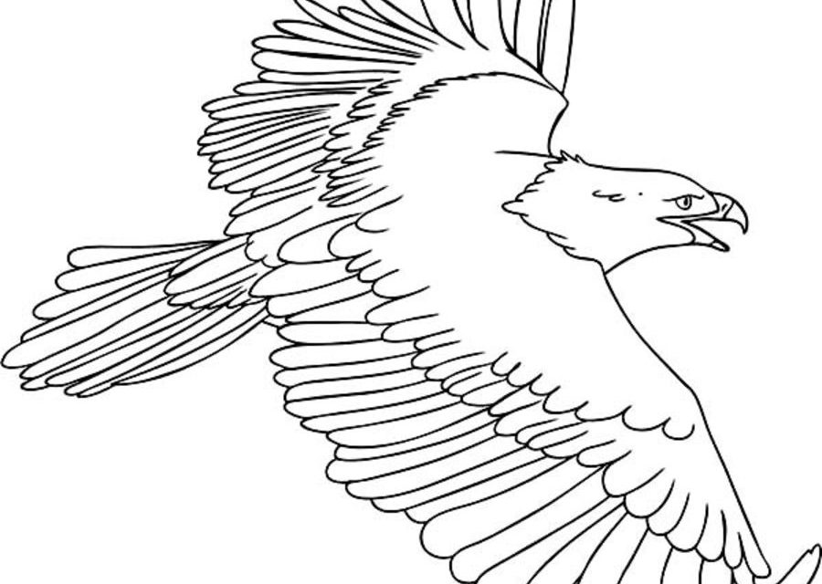 osprey coloring page osprey fishing coloring nature coloring osprey page