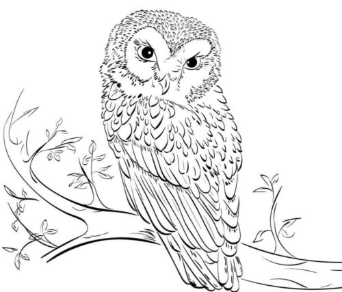 owl coloring 35 free owl coloring pages printable coloring owl