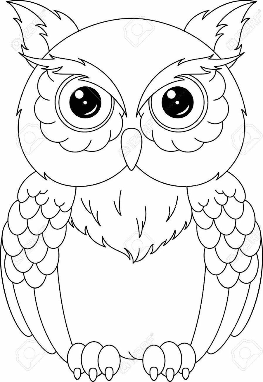 owl coloring owl clipart coloring pages and other free printable owl coloring