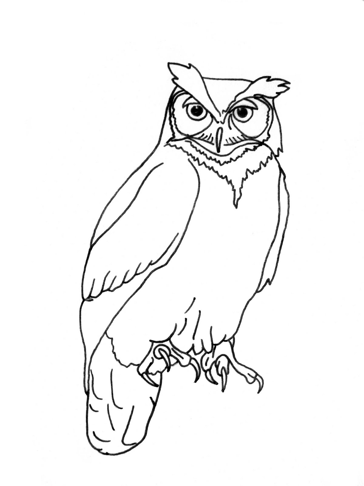 owl coloring realistic owl drawing at getdrawings free download coloring owl