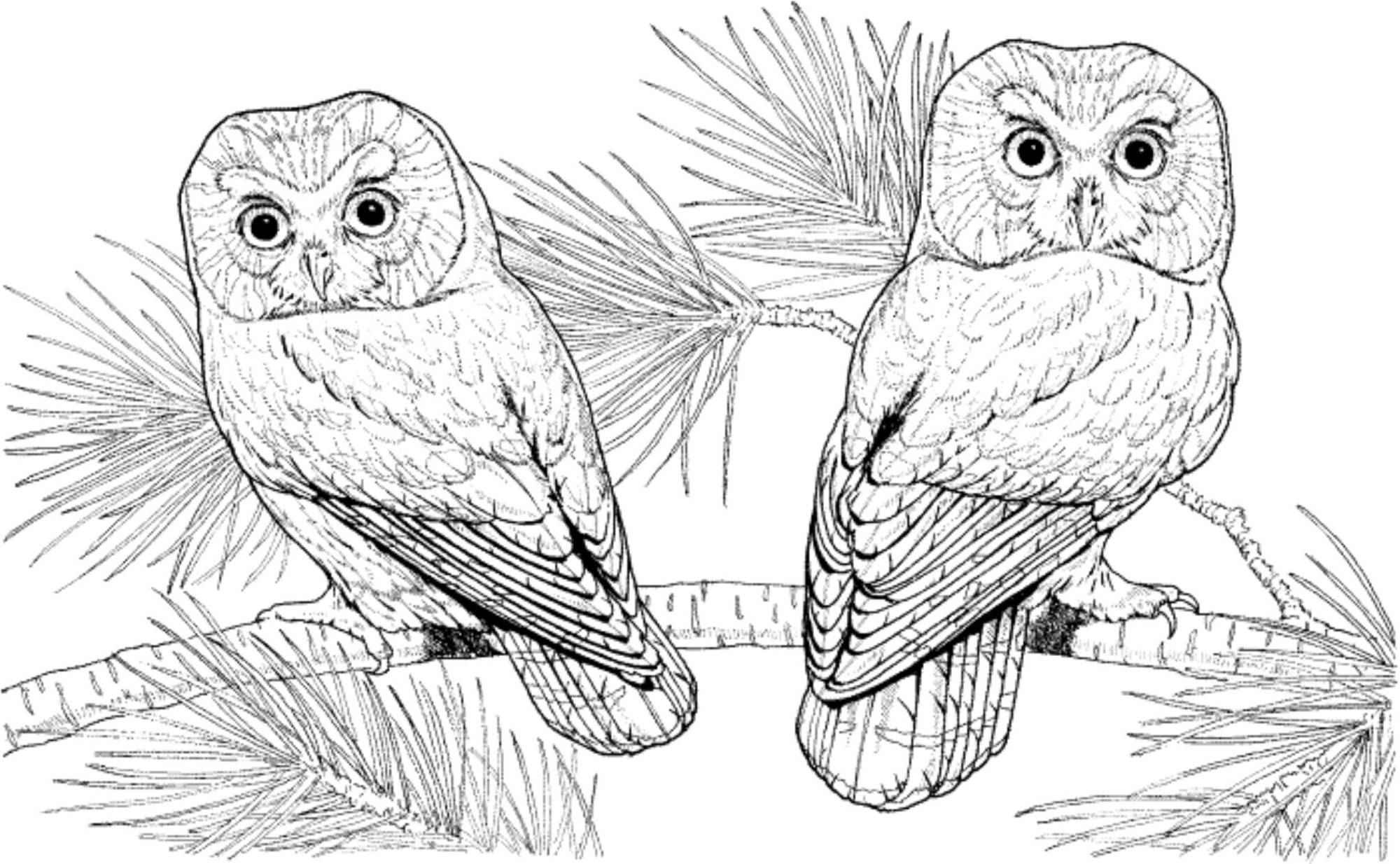 owl printable coloring pages bird coloring pages coloring owl printable pages