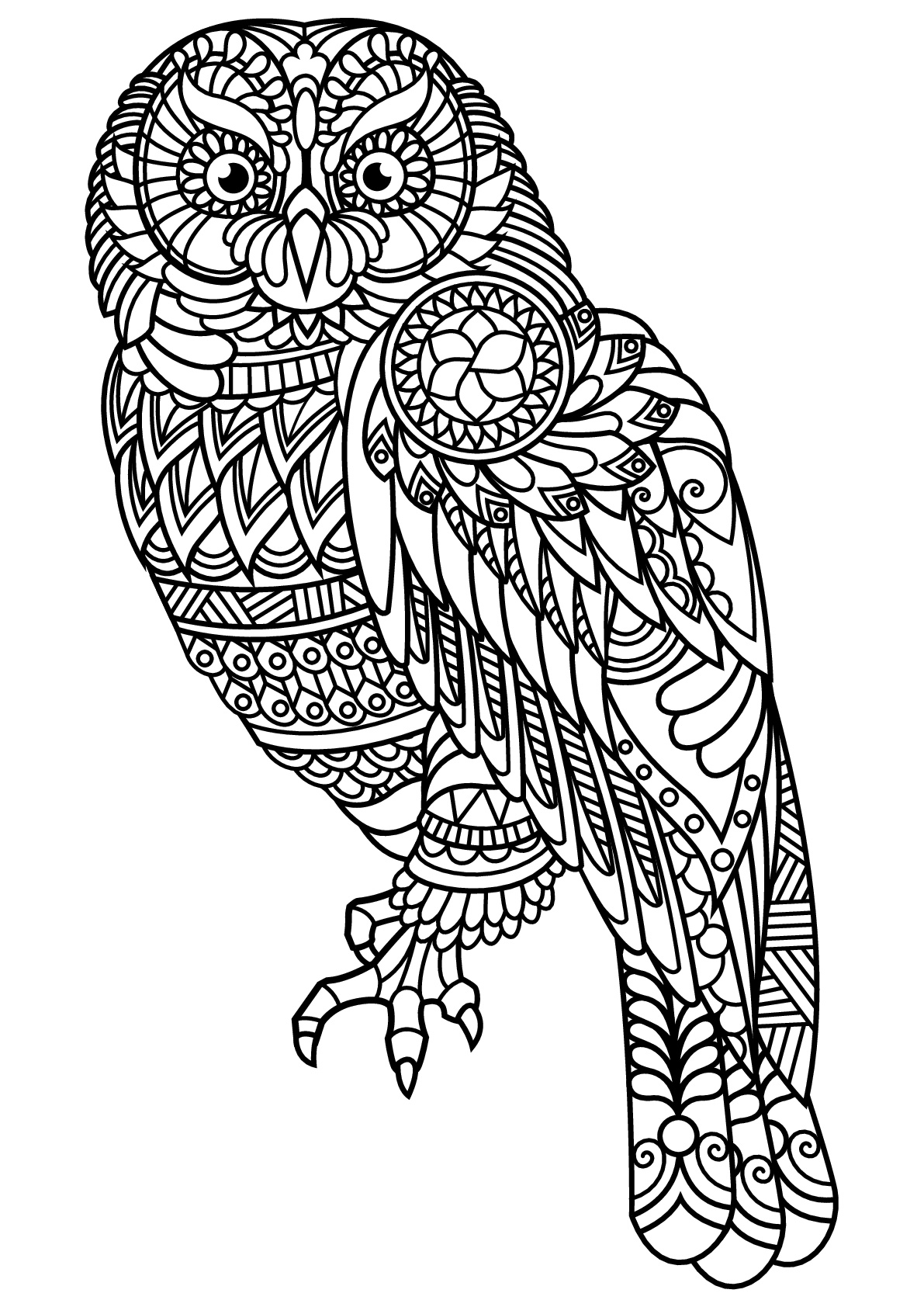 owl printable coloring pages print download owl coloring pages for your kids coloring owl printable pages