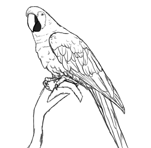 parrot outline lovely parrot coloring page download print online outline parrot