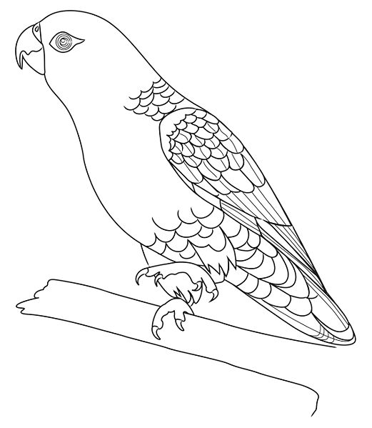 parrot outline parrot drawing outline at getdrawings free download outline parrot 1 2