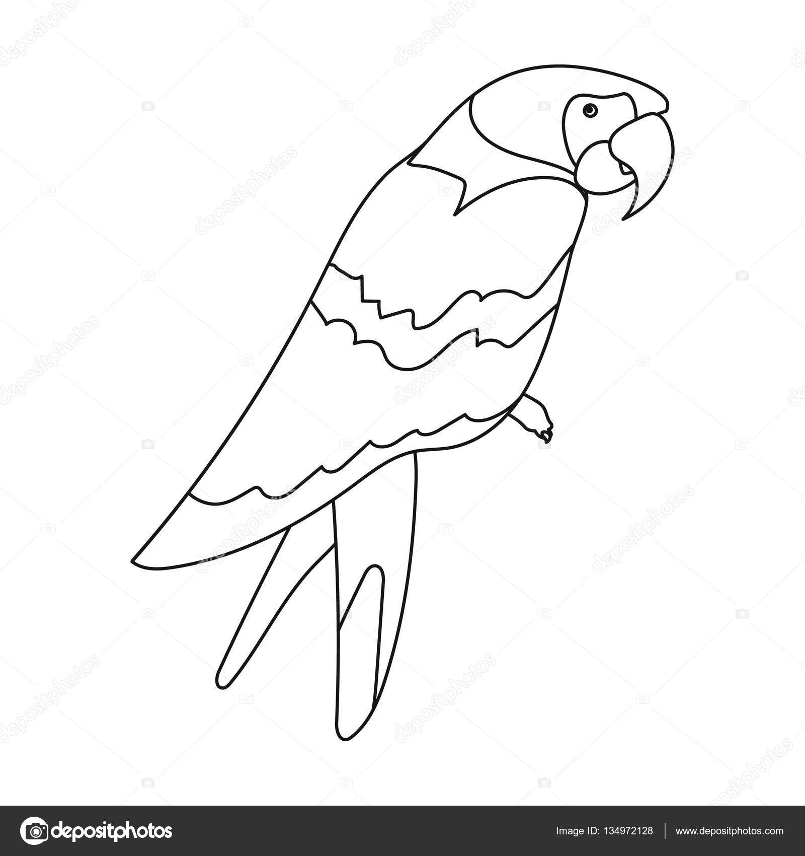 parrot outline parrot icon outline style stock vector illustration of outline parrot