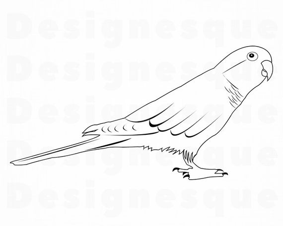 parrot outline pencil sketches and drawings how to draw a parrot parrot outline