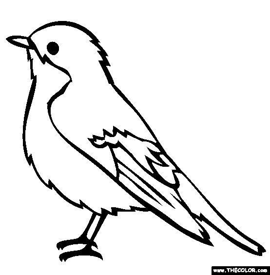 parrot outline pirates parrot icon in outline style isolated on white outline parrot