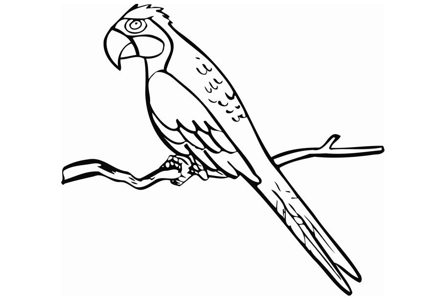 parrot pictures to print free parrot and macaw coloring pages pictures parrot to print