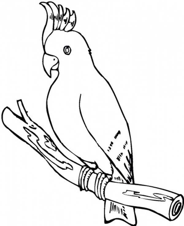 parrot pictures to print lovely parrot coloring page download print online print pictures parrot to