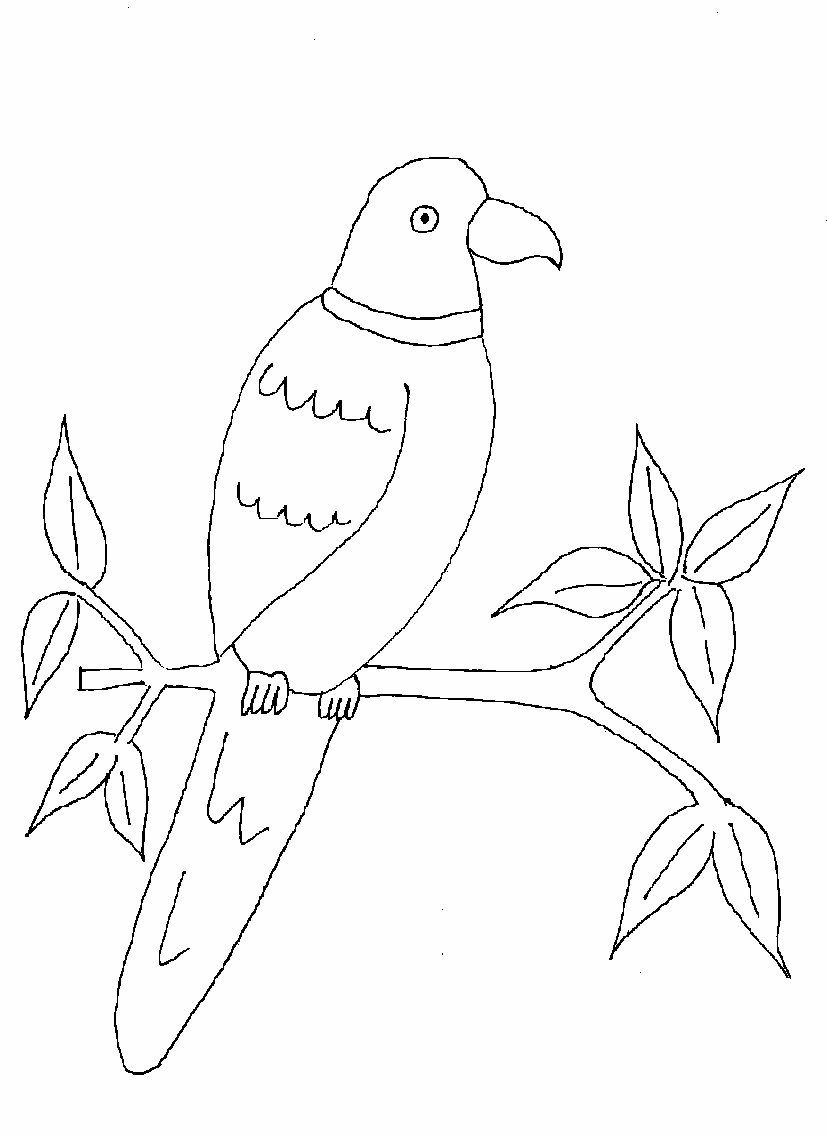 parrot pictures to print parrot coloring pages download and print parrot coloring pictures to print parrot