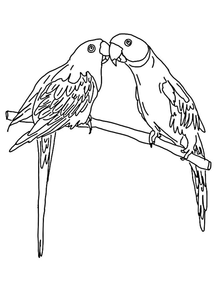 parrot pictures to print parrot printable coloring page for kids parrot print pictures to
