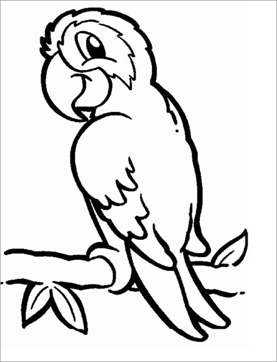 parrot pictures to print printable parrot coloring pages for kids cool2bkids pictures to parrot print