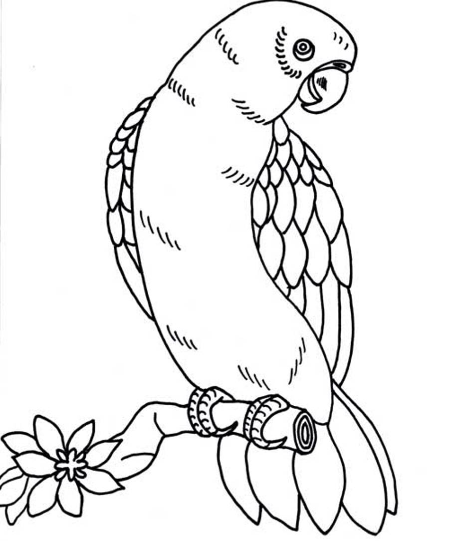 parrots pictures to colour a sisserou parrot coloring page free printable coloring colour to pictures parrots