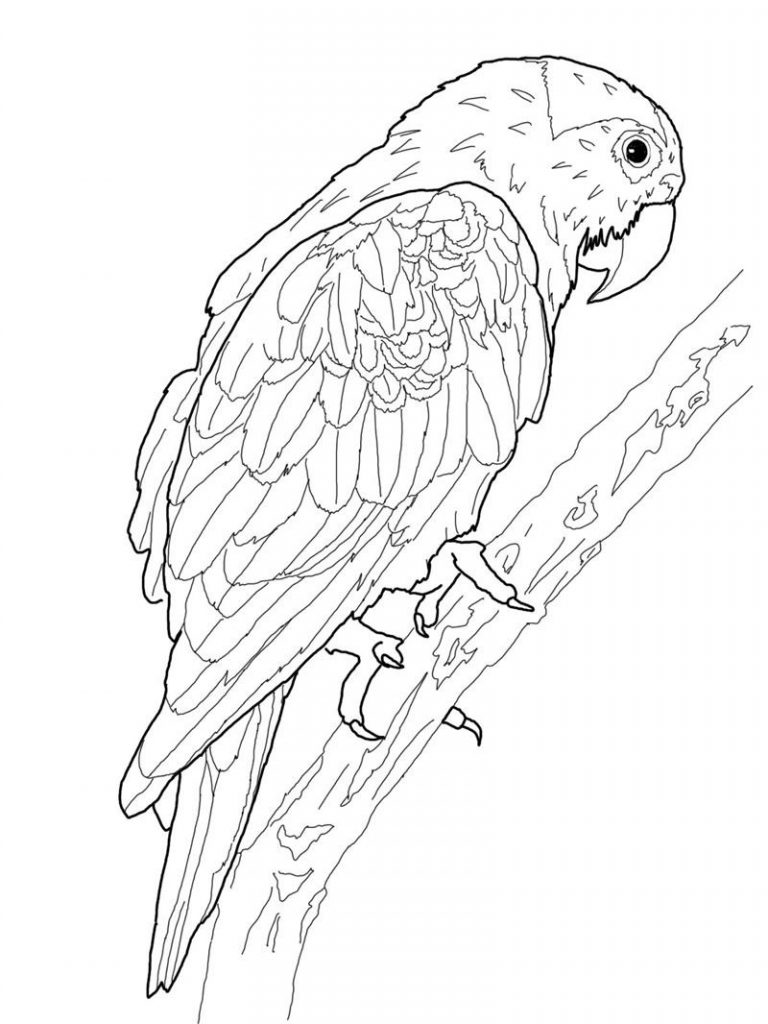 parrots pictures to colour get this parrot coloring pages free printable 75185 colour pictures parrots to