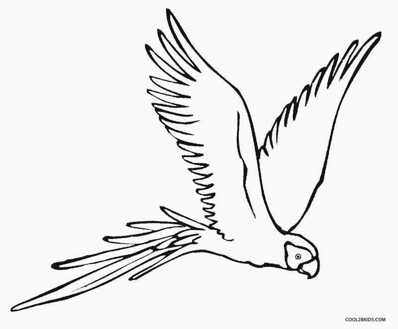 parrots pictures to colour hd animals parrot bird coloring pages colour to pictures parrots