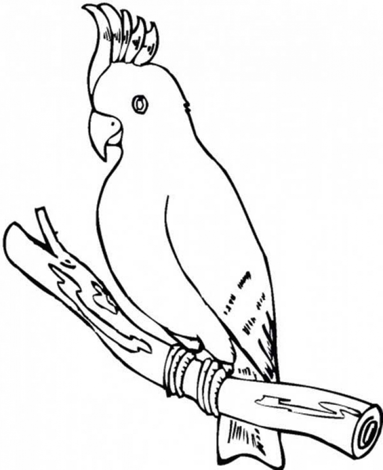 parrots pictures to colour lovely parrot coloring page download print online pictures to parrots colour