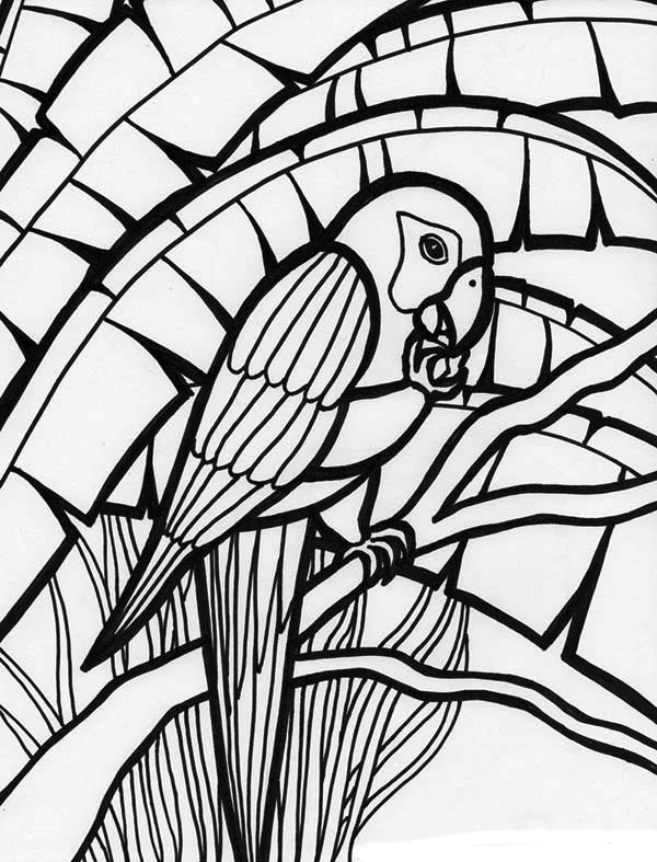 parrots pictures to colour parrot looking for food coloring page download print parrots pictures colour to