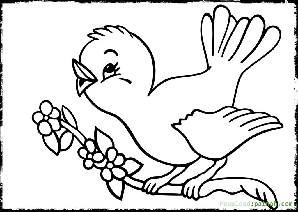 parrots pictures to colour pets coloring pages best coloring pages for kids colour parrots to pictures
