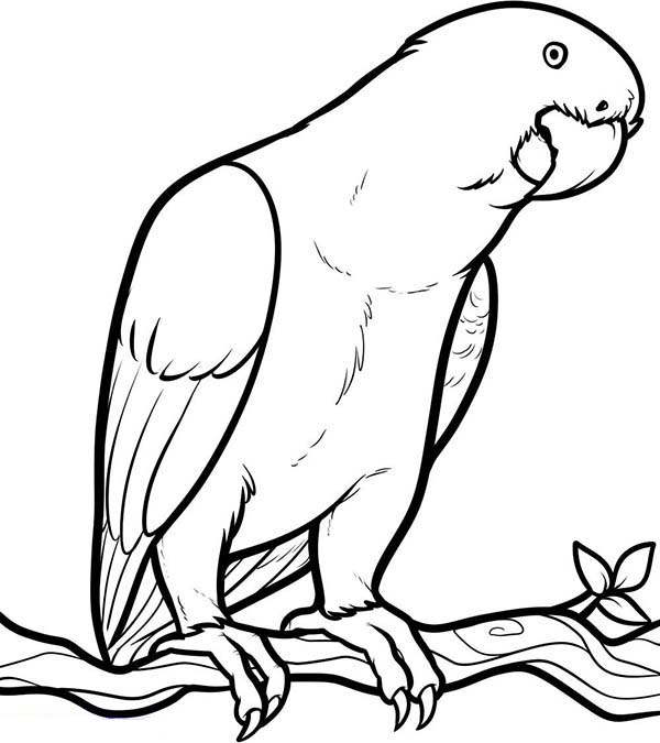 parrots pictures to colour tropical bird coloring pages at getcoloringscom free colour pictures parrots to