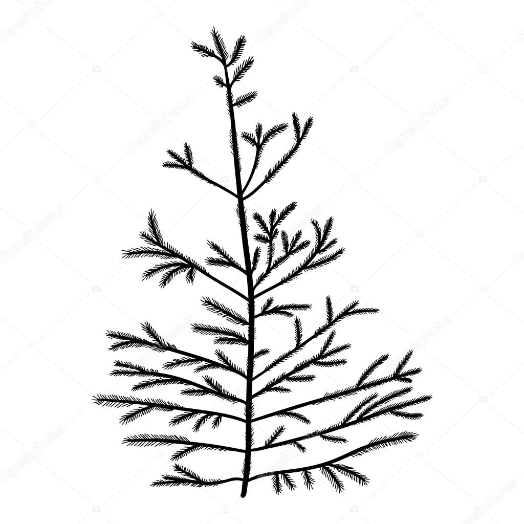pencil drawings of pine trees 16 best images about evergreen pine tree black white on of drawings pine pencil trees