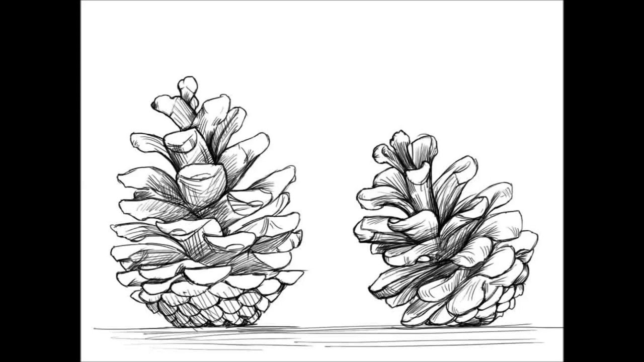 pencil drawings of pine trees drawn pine tree leaf drawing pencil and in color drawn of drawings trees pine pencil