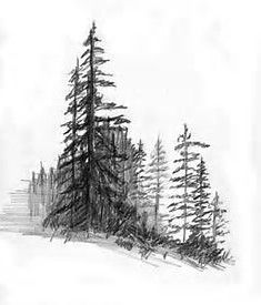 pencil drawings of pine trees eastern white pine tree drawing clip art pine tree png pine drawings trees pencil of