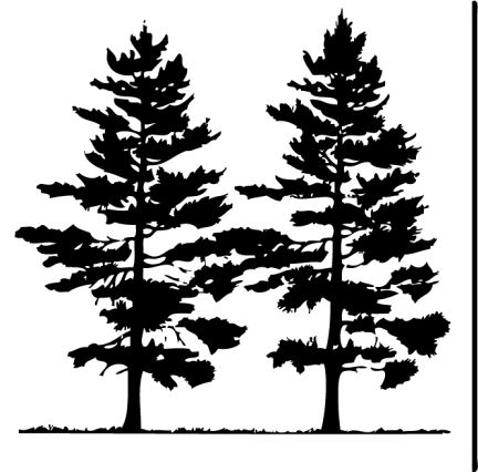 pencil drawings of pine trees pine tree clip art at clkercom vector clip art online trees pencil pine drawings of